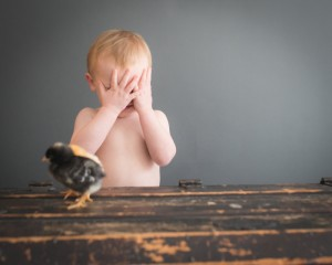 Baby Chick Portraits