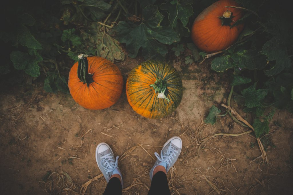 Eckerts Pumpkin Pictures