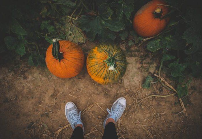 Eckerts Pumpkin Pictures - Belleville, IL